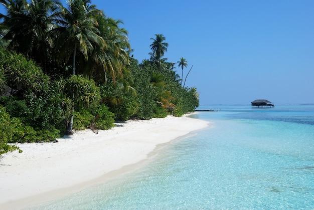 Floresta com palmeiras em uma costa perto da praia com uma casa à distância Foto gratuita
