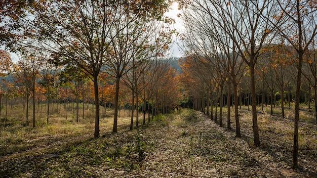 Floresta da tailândia Foto Premium