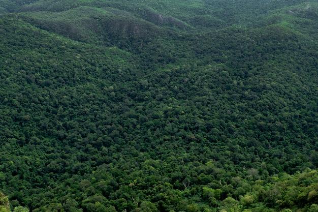 Floresta de árvores verdes na montanha Foto Premium