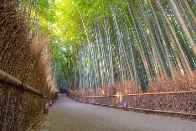 Floresta de bambu da natureza bonita na estação do outono em arashiyama em kyoto, japão. Foto Premium