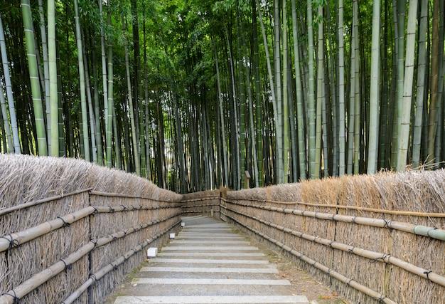 Floresta de bambu em arashiyama, kyoto, japão Foto Premium