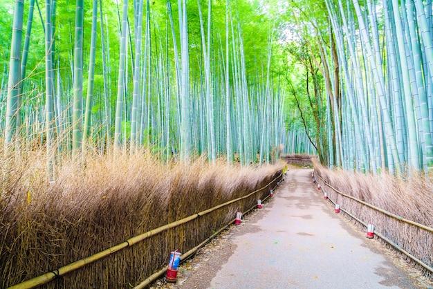 Floresta de bambu Foto gratuita