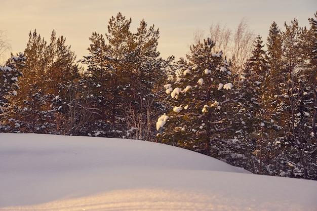Floresta de inverno em um dia ensolarado e gelado com céu azul Foto Premium