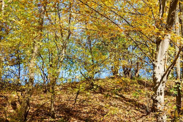 Floresta de outono colorida em um dia quente e ensolarado Foto Premium