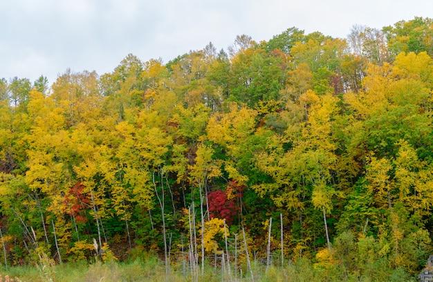 Floresta de outono na montanha perto da lagoa azul Foto Premium
