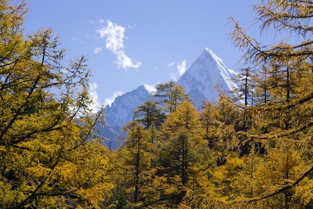 Floresta de outono Foto Premium
