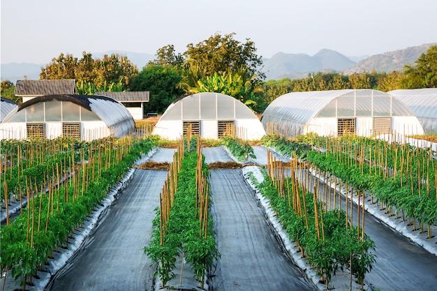 Floresta e montanhas naturais da agronomia do campo de exploração agrícola. Foto Premium
