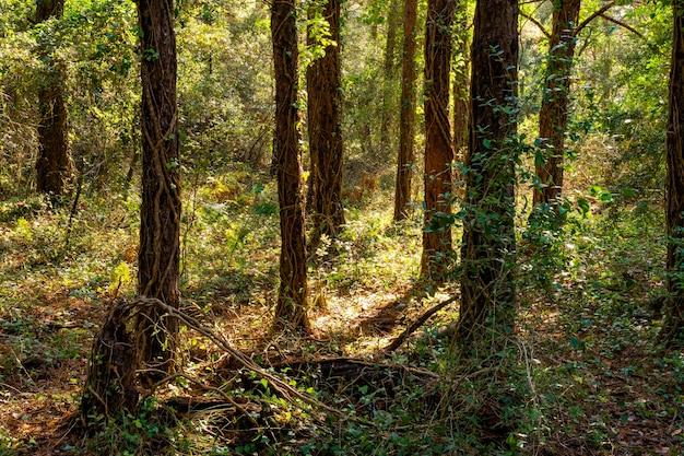 Floresta encantada no outono Foto Premium