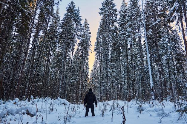 Floresta escura, um passeio na mata antes do natal Foto Premium