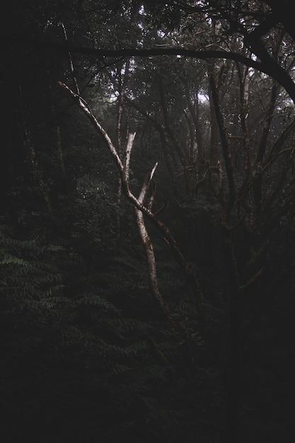 Floresta misteriosa escura cheia de diferentes tipos de plantas Foto gratuita