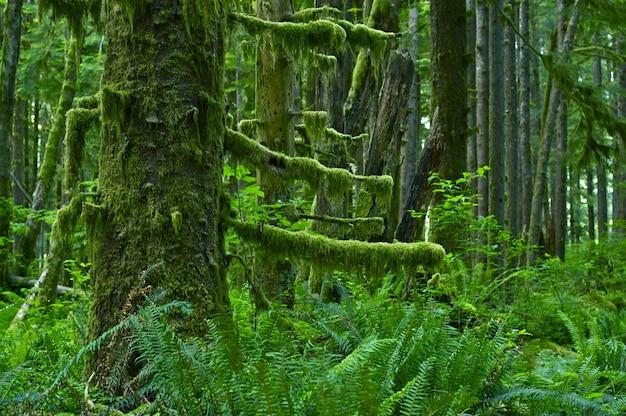 Floresta pluvial noroeste do pacífico Foto gratuita
