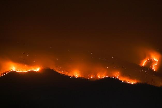 Floresta queimando árvores à noite Foto Premium