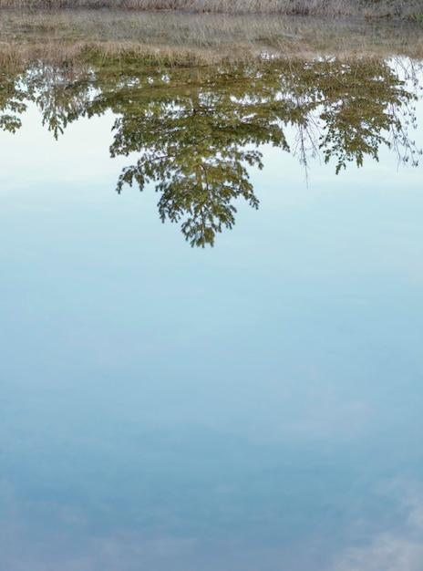 Floresta refletida na água do lago Foto gratuita
