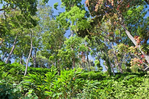Floresta tropical profunda Foto Premium
