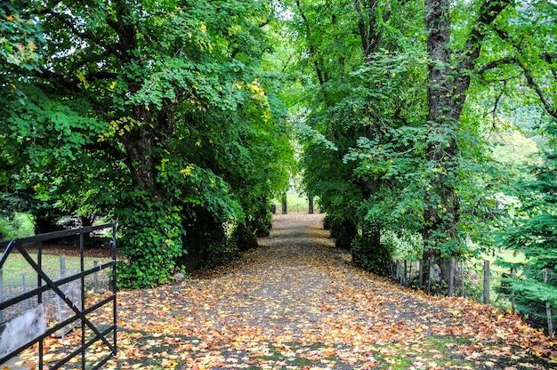 Floresta úmida escócia Foto Premium