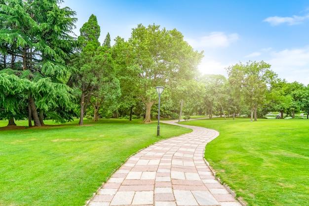 Floresta verde verde no parque Foto Premium