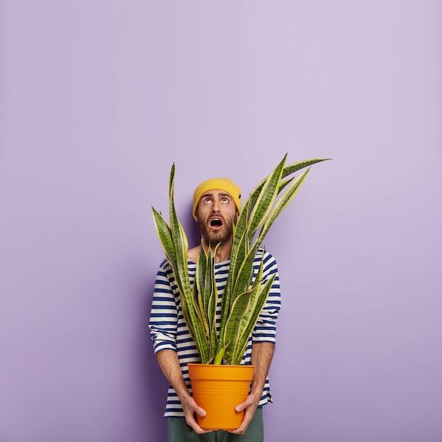 Florista caucasiano, impressionada, segurando o vaso com planta de casa, focada para cima com expressão facial surpresa, ocupada fazendo o trabalho doméstico Foto gratuita