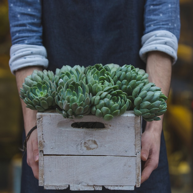 Florista masculina segurando uma cesta de madeira de suculentus Foto gratuita