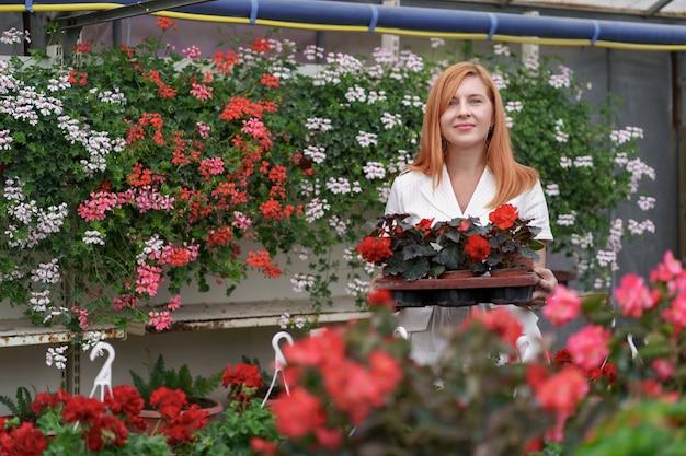 Florista sorridente e feliz em seu viveiro de pé segurando um vaso de gerânios vermelhos nas mãos enquanto cuida das plantas do jardim na estufa Foto gratuita