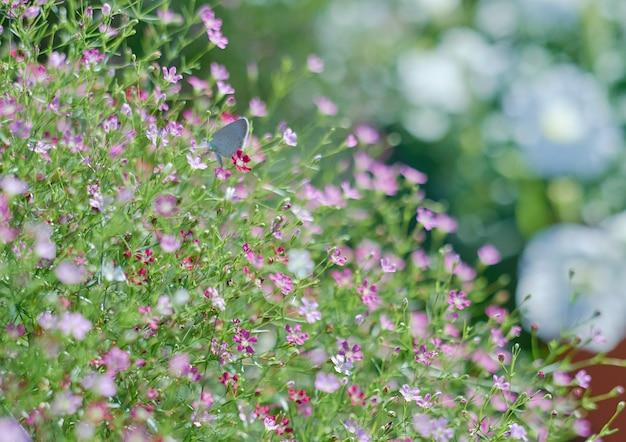 Florzinha florescendo na temporada de primavera Foto Premium