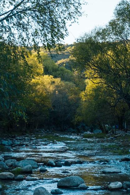Fluxo de água correndo na bela paisagem de outono Foto gratuita