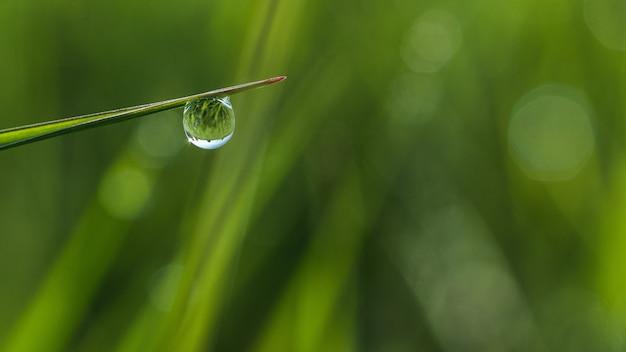 Foco raso em close de uma gota de orvalho na grama com bokeh Foto gratuita
