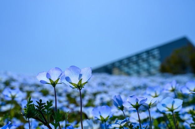 Foco seletivo de flor, foco seletivo no assunto, desfoque de fundo, durante o tempo natureza incrível agradável novo maravilhosamente foto Foto Premium