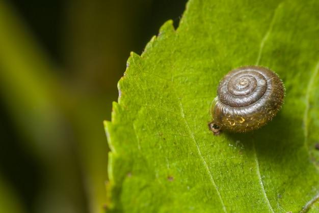 Foco seletivo de uma concha de caracol transparente em uma folha verde Foto gratuita