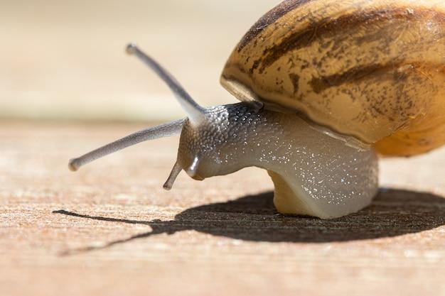 Foco suave de um caracol rastejando na calçada de madeira em um dia ensolarado Foto gratuita