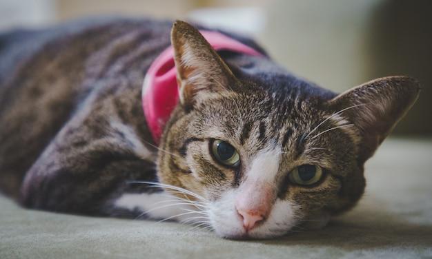 Foco suave um gatinho gato malhado marrom dormindo na cama confortavelmente e não impressionado. Foto Premium