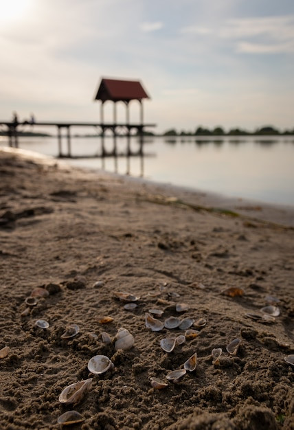 Foco superficial de conchas na areia com um oceano borrado Foto gratuita