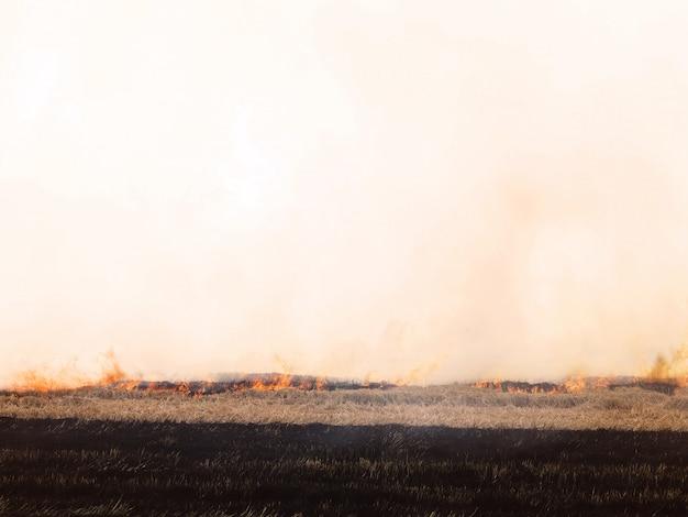 Fogo e fumaça no campo. Foto Premium