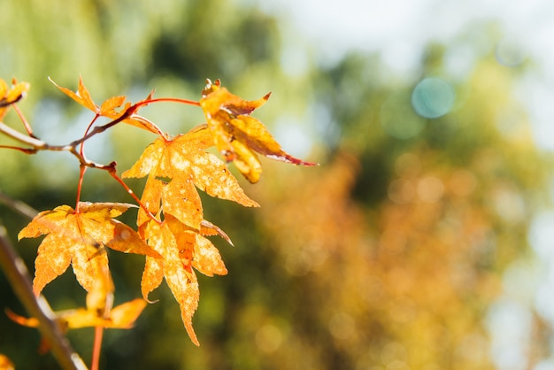 Folha amarela na luz solar. Foto Premium