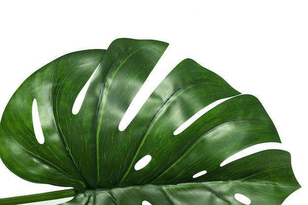 Folha da planta de monstera isolada no fundo branco Foto Premium