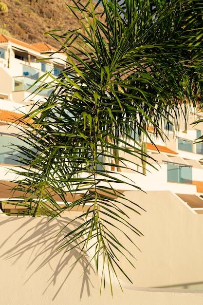 Folha de árvore de coco com casas no fundo Foto gratuita