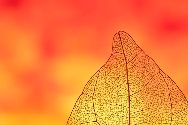 Folha de outono colorida laranja abstrata Foto gratuita