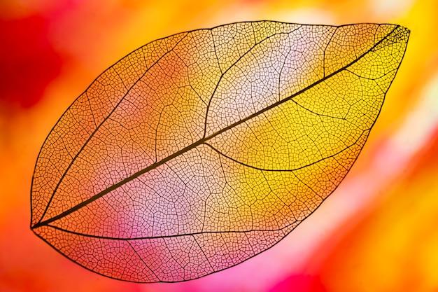 Folha de outono cor laranja vibrante Foto gratuita