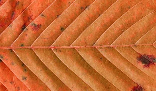 Folha de outono de fundo de textura. textura folhagem de outono Foto Premium