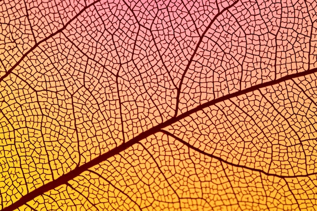 Folha de outono laranja abstrata Foto gratuita