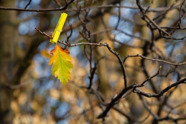 Folha de outono laranja no ramo nu com prendedor de roupa no fundo da floresta de outono Foto Premium