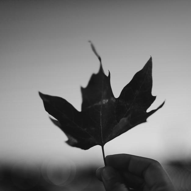 Folha de outono no céu Foto gratuita