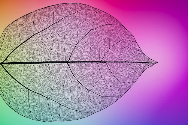 Folha de outono vibrante roxa Foto gratuita