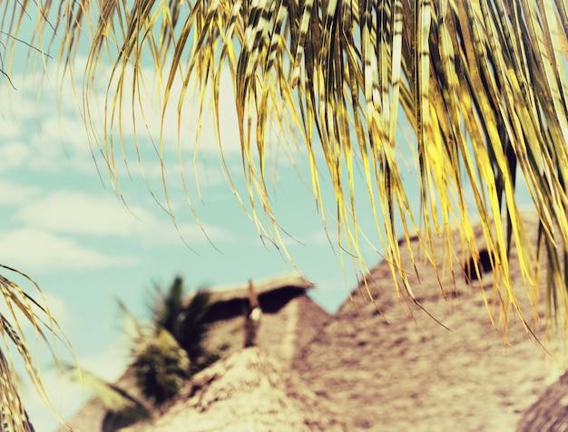 Folha de palmeira de coco close-up Foto Premium