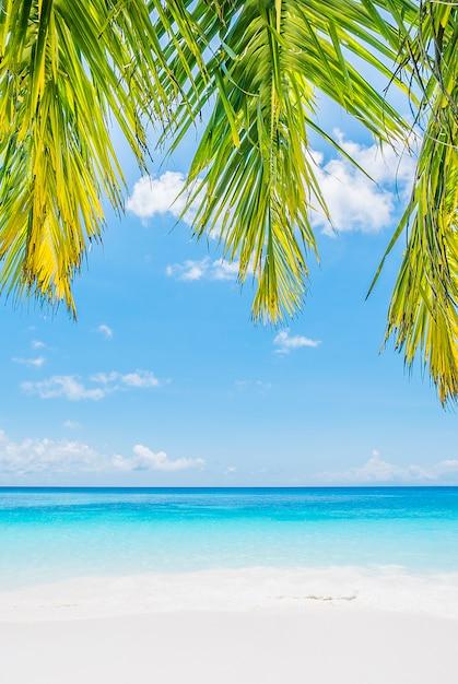 Folha de palmeira de coco Foto gratuita
