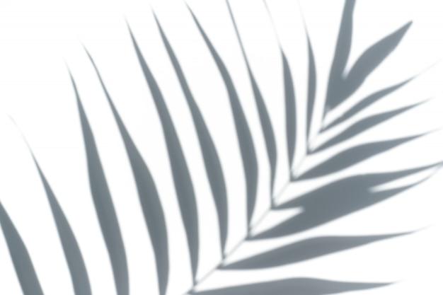Folha de palmeira tropical em um fundo branco Foto Premium
