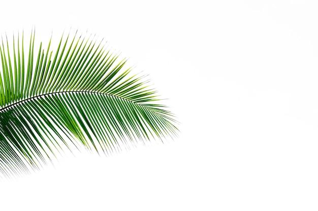 Folha de palmeira verde isolada no branco Foto Premium