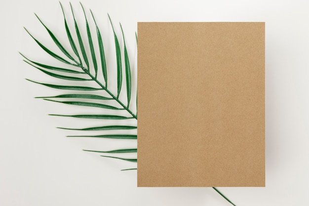 Folha de palmeira vista superior com espaço de cópia Foto gratuita