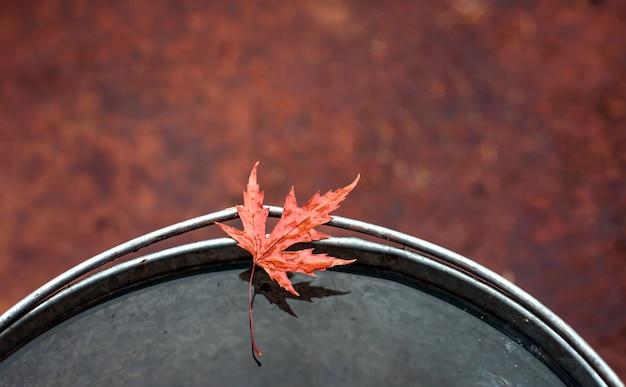 Folha de plátano vermelha bonita na borda de uma cubeta da lata com água. Foto Premium