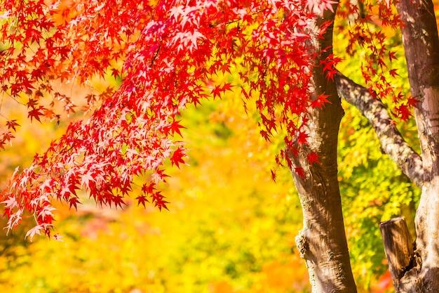 Folha de plátano vermelha e verde bonita na árvore Foto gratuita