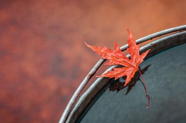 Folha de plátano vermelha molhada bonita na borda da cubeta da lata com água. Foto Premium